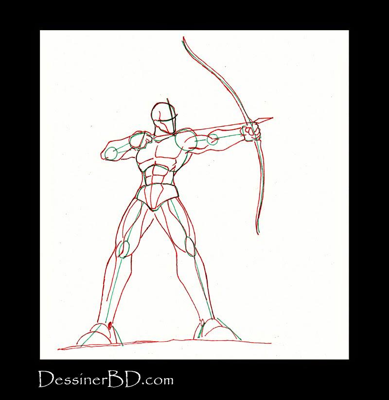 anatomie et muscles archer