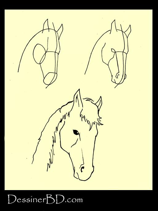 apprendre à dessiner la tête des chevaux