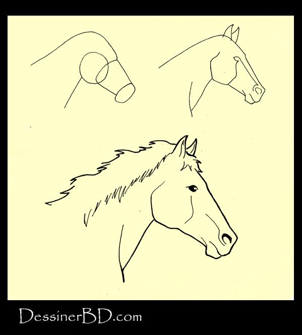 apprendre à dessiner une tête de cheval