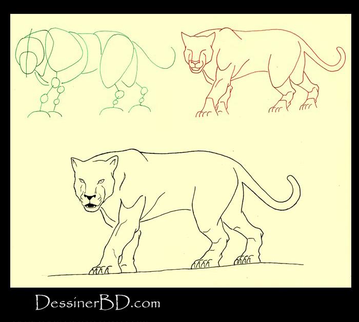 apprendre à dessiner un félin A