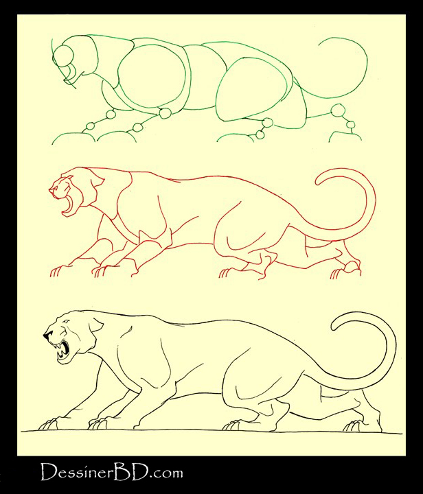 apprendre à dessiner un félin