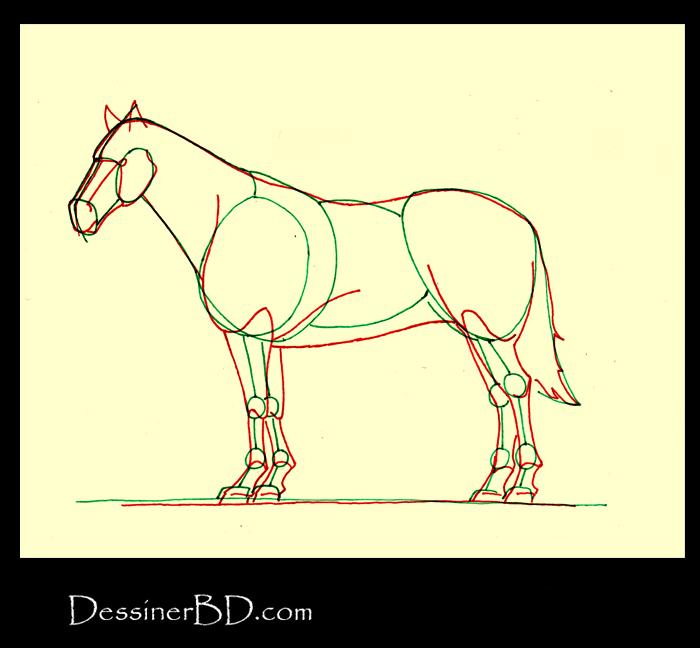 Comment dessiner morphologie cheval